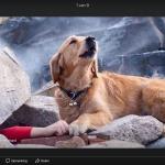 hond bij slachtoffer